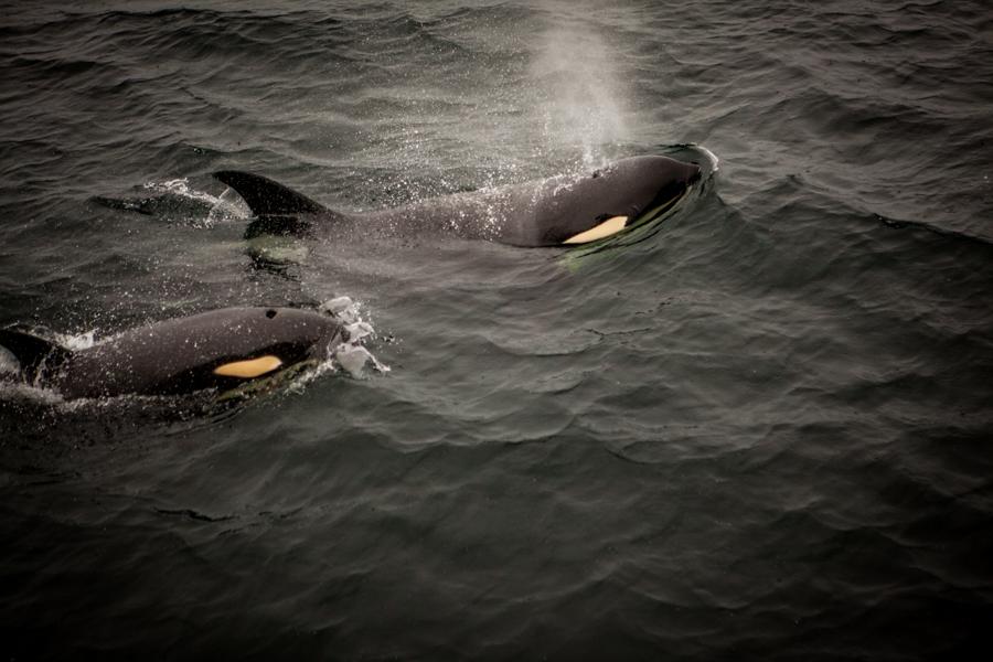 Orca, Alaska
