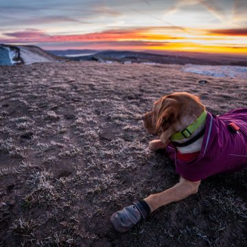Ruffwear Products