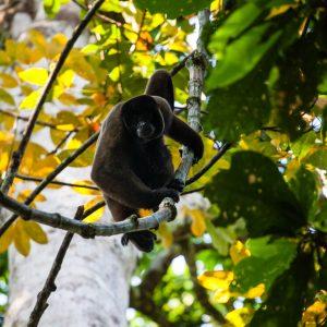 British Exploring Society Amazon Expedition